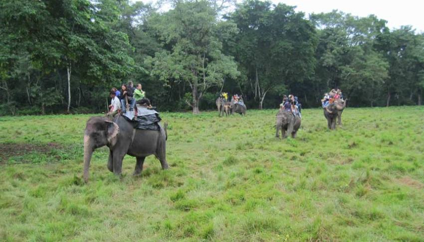 Jungle Safari Tour, Nepal