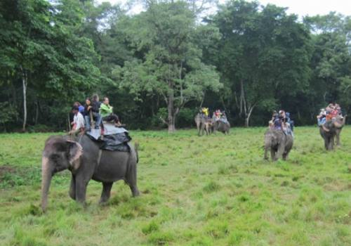 Jungle Safari en Chitwan